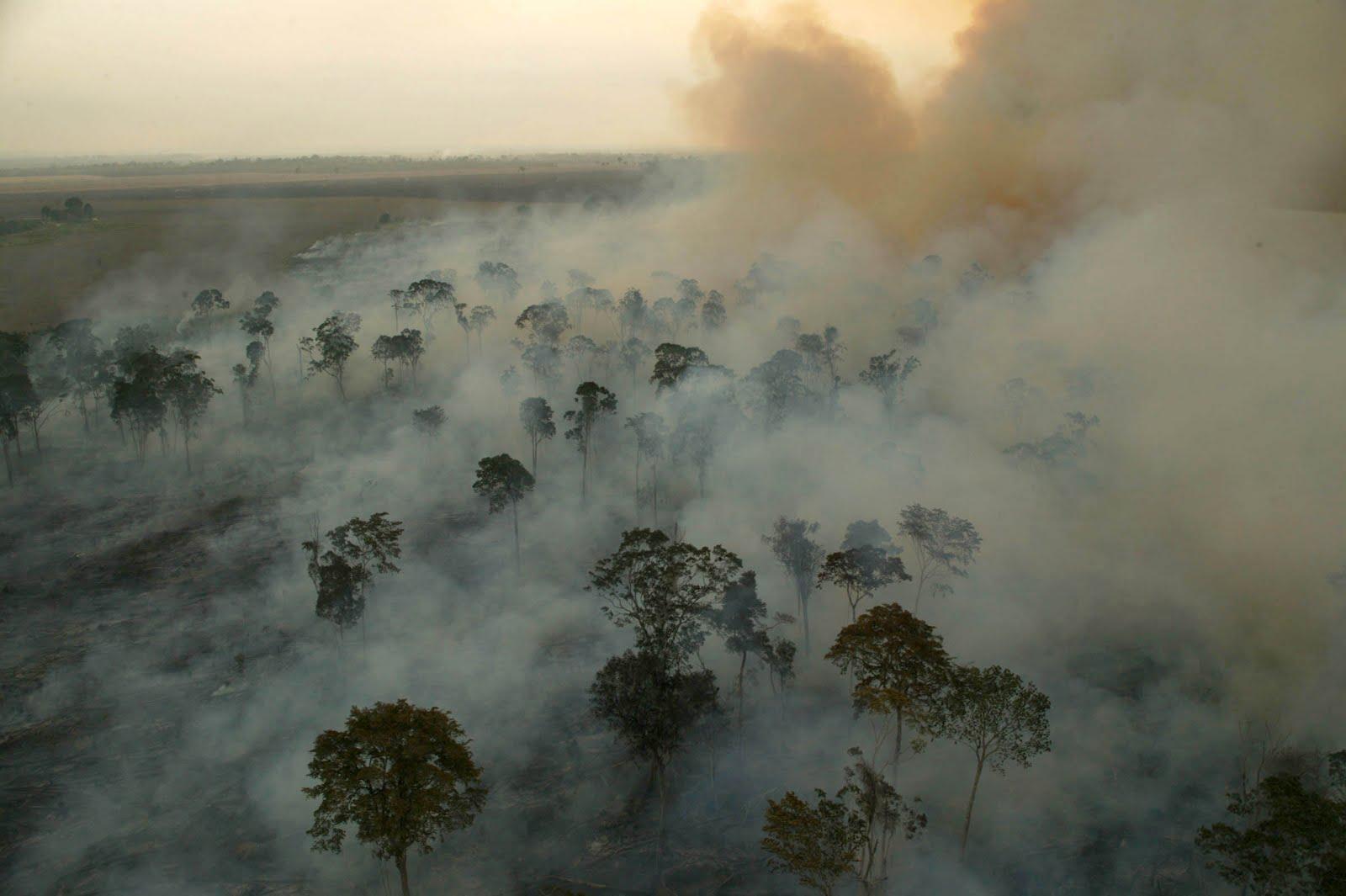 Fotos da amazonia antes do desmatamento 58