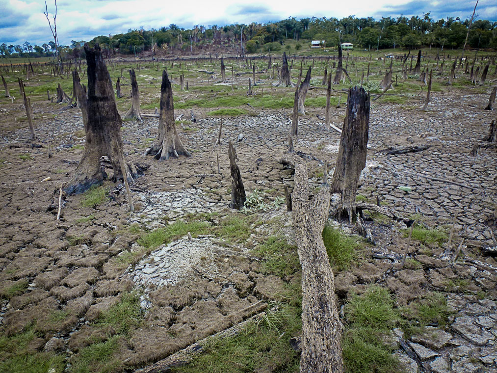 Amazon droughts could impact climate deforestation