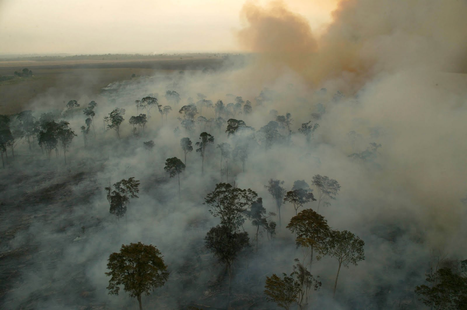 Amazon droughts could impact climate change as much as deforestation