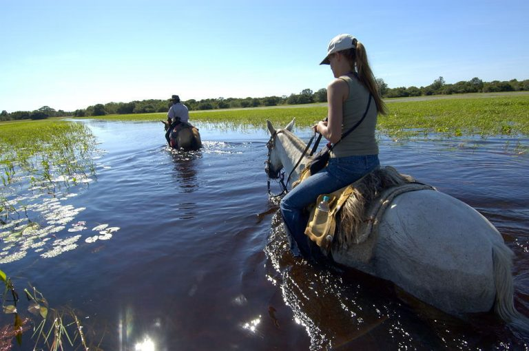 pantanal wetland risk wwf