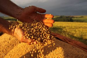 embrapa agricultural research brazil