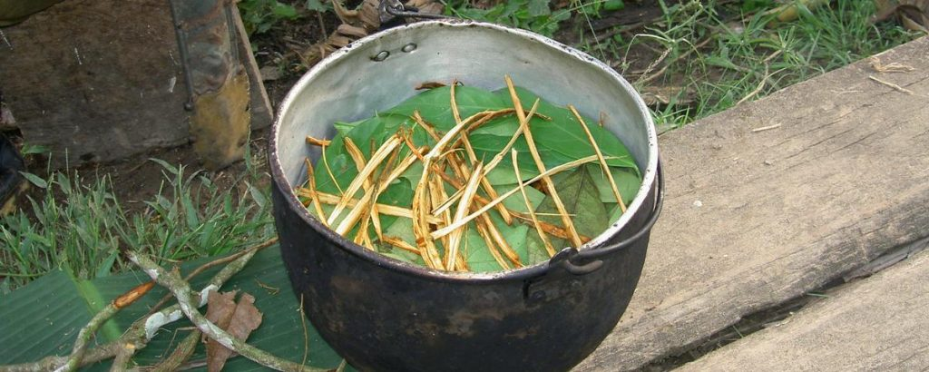 Ayahuasca being brewed in a nonclinical setting