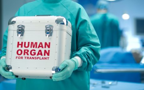 stem cells human organ transplants