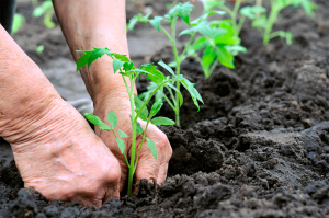 More efficient farming key to conserving Cerrado's native vegetation brazil agribusiness