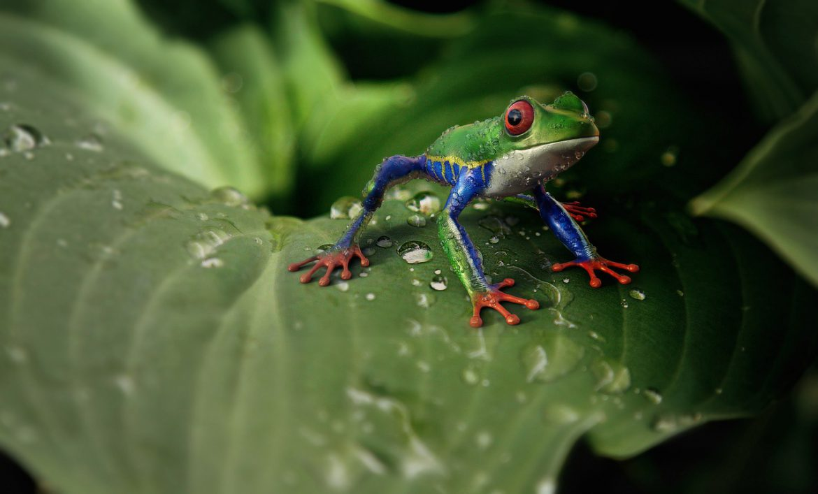 Climate change could disappear with several Atlantic Forest species