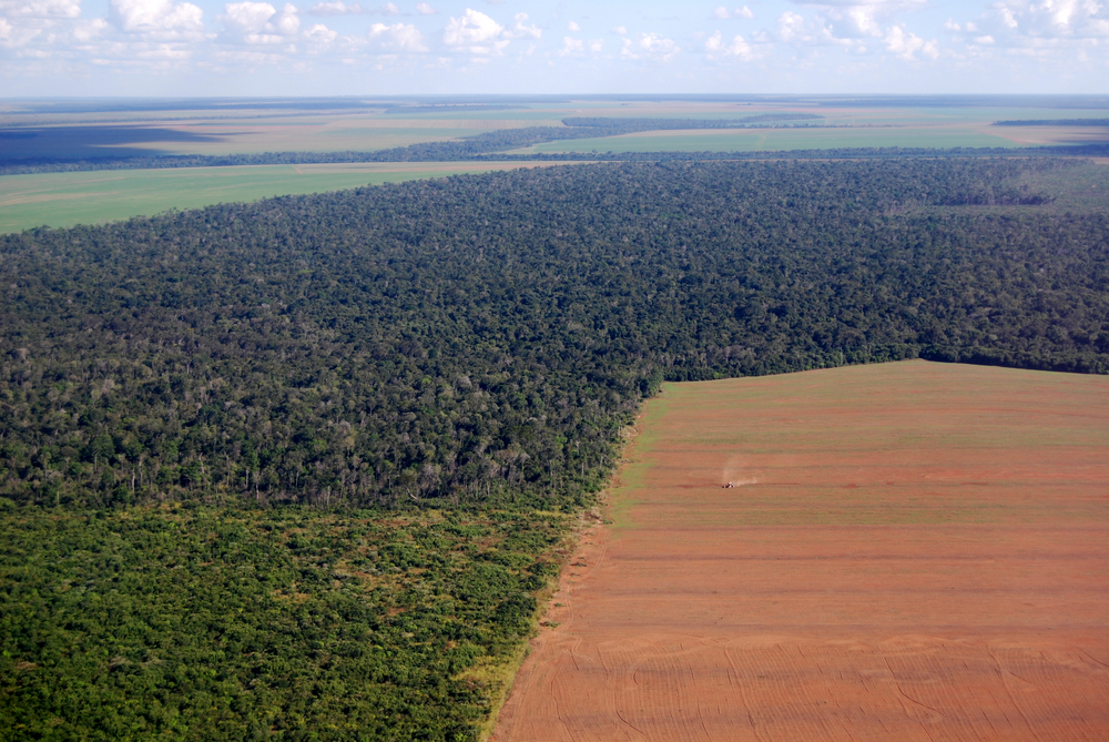large soy field eating into the tropical Amazon rainforest