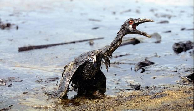 Guanabara bay oil spill environmental disaster