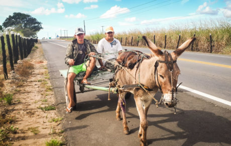 A donkey working in the center of Bahia: although donkeys are still often used, motorcycles have been increasingly popular in recent years.