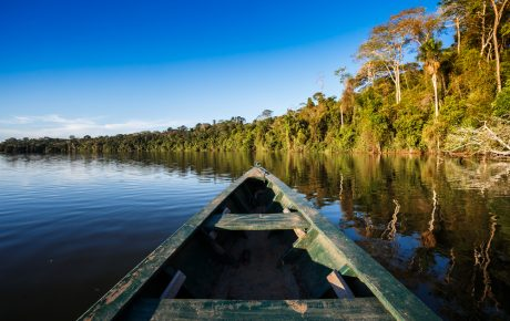 amazon rainforest infoamazonia