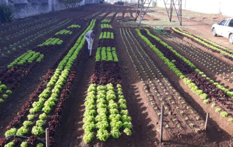 sao paulo sustainable agriculture