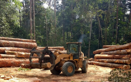 A Human Rights Watch report on Amazon deforestation paints a picture of destruction, collusion, struggle, death and impunity
