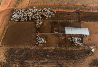 amazon Beef production is linked with the deforestation of the Amazon but traceability in supply chains is poor (image: Fábio Nascimento)