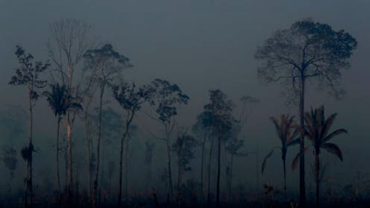 evangelicals Trees that survived a forest fire stand in the Vila Nova Samuel region of Brazil. Photo: Eraldo Peres