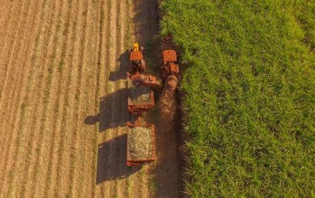 sugarcane harvest mailson pignata