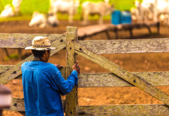 What to expect from Brazilian agro in 2020?