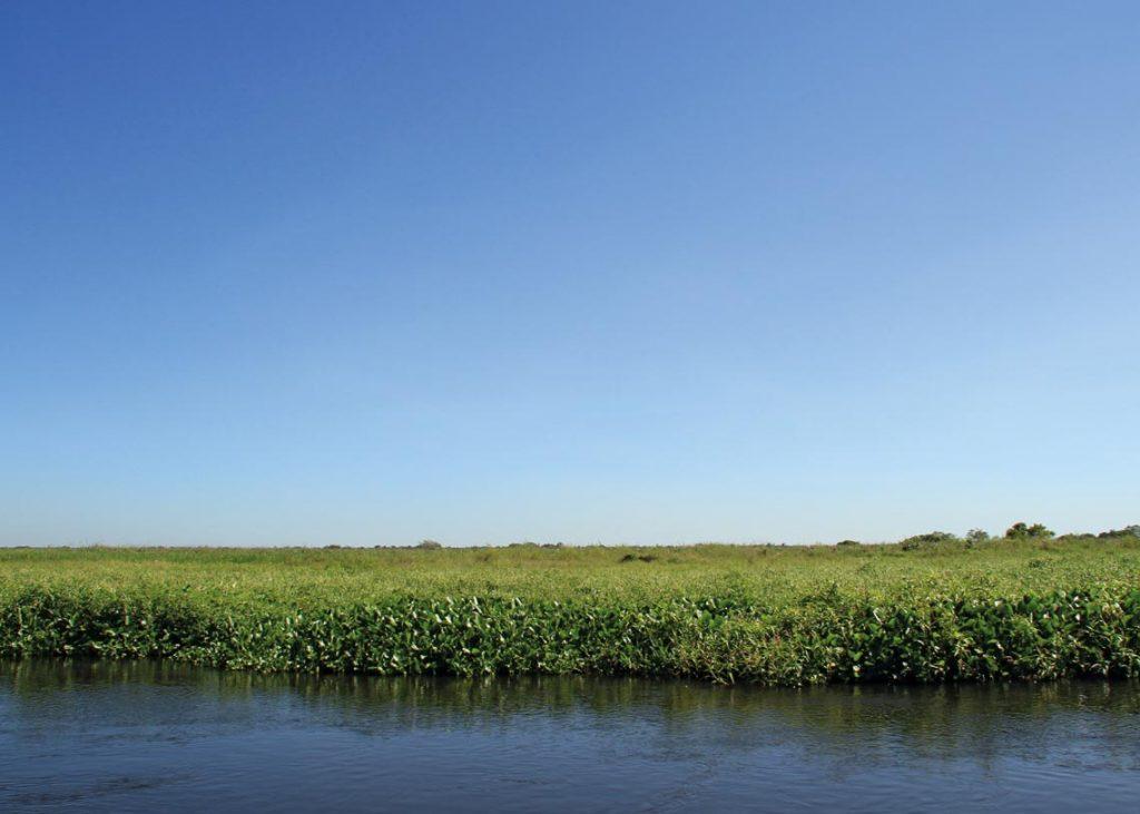 pantanal plants